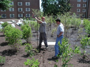 Augering UD rain garden 2 Jun 2005.JPG