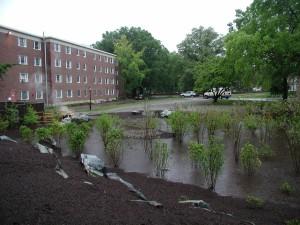 UD Rain Garden 2 May 2005.JPG